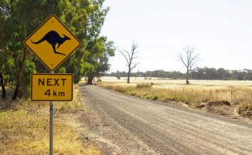 Kangaroo Next 4 km - Australian road sign on a country road