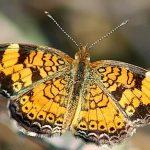 Big Cypress National Preserve - Florida - USA - butterfly