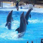 Dolphins in Selwo Marina, Benalmadena, Malaga, Spain