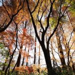 Japan - Mizumoto Park - leaves - forrest - light