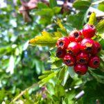 Kyneton-Botanical-Gardens-day-trip-MelbourneWP_20170326_14_37_01_Pro__highres_e