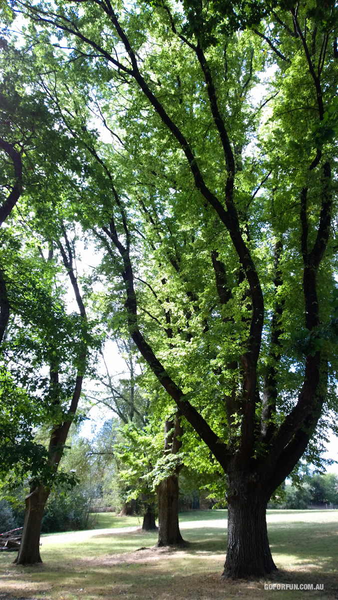 Kyneton-Botanical-Gardens-day-trip-MelbourneWP_20170326_14_46_40_Pro__highres_e