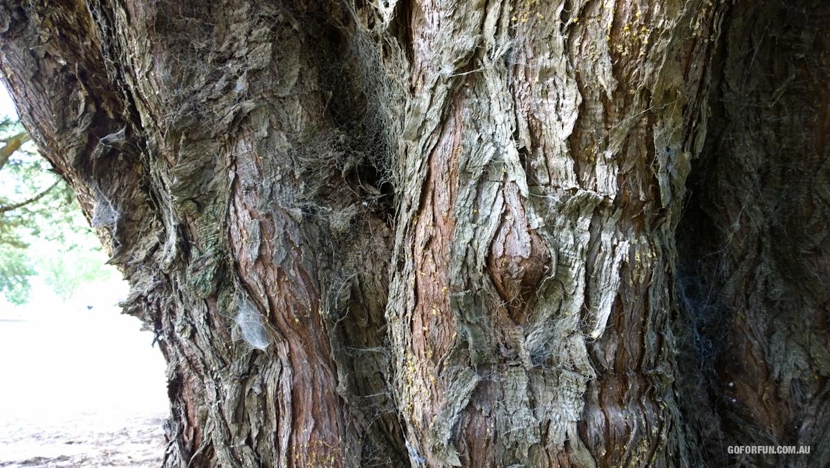 Kyneton-Botanical-Gardens-day-trip-MelbourneWP_20170326_15_07_51_Pro__highres_e
