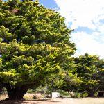 Kyneton-Botanical-Gardens-day-trip-MelbourneWP_20170326_15_21_35_Pro__highres_e