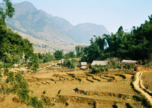 Laos - rice fields landscape