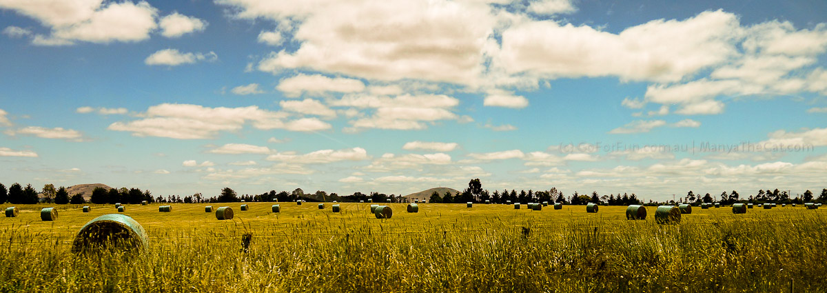 Endless fields of wheat or rye spread across Victoria, Australia. Go For Fun - Australian Travel and Activity Community. Inspire, Share, Enjoy!