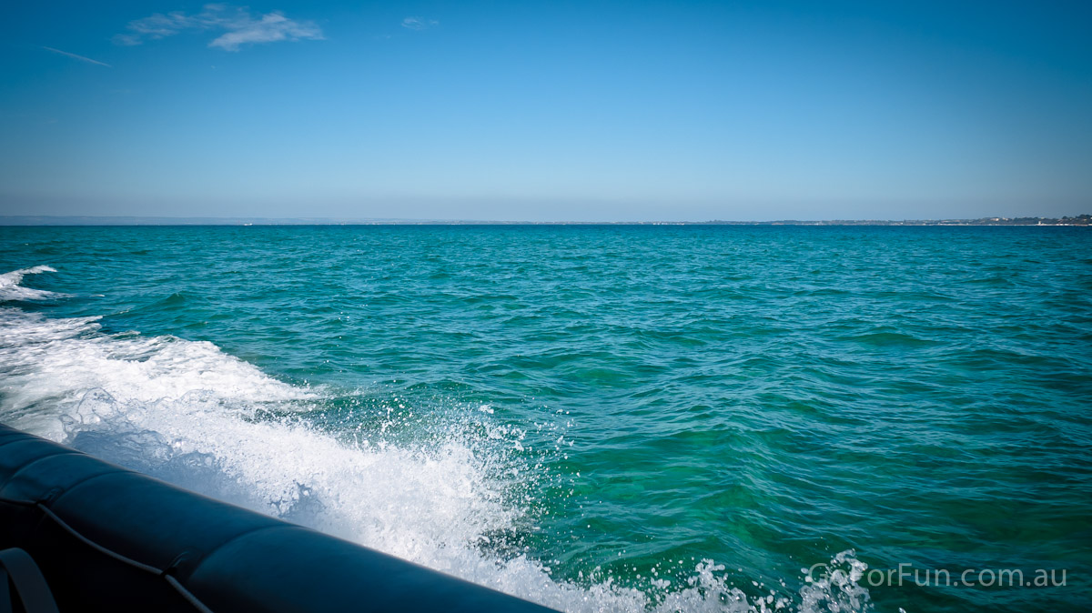 Port Phillip Bay - Eco Boat Discovery Tour - Queenscliff Harbour - South Bay Eco Adventures - seal - gannet - sea
