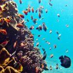 Scuba diving - Bali - Nusa Lembongan - Asia
