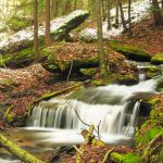 Wolf Run - Tiadaghton State Forest - Lycoming County