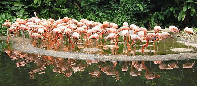 Flamingoes at Jurong Birdpark - Australians Travelling - Singapore