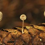 photo - light - nature - mushroom - brown - forrest