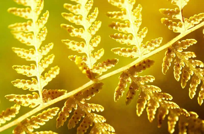 photo - macro - light - nature - yellow fern