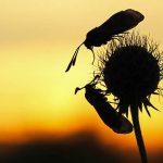 photo - macro - light - butterfly - papillon