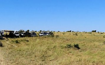 Safari in Masai Mara, Africa - Australians Travelling - Africa