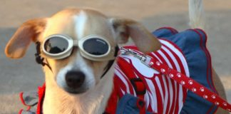 Sun protection - Australia - dog eyes protection from UV rays