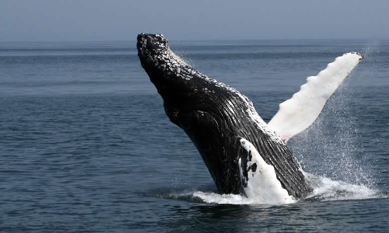 whale watching  | Australian Travel and Activity Community - Go For Fun