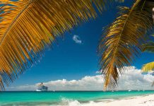 Catalina Island - La Romana - Dominican Republic - cruise ship near the shore with a palm
