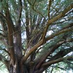Kyneton-Botanical-Gardens-day-trip-MelbourneWP_20170326_15_07_22_Pro__highres_e