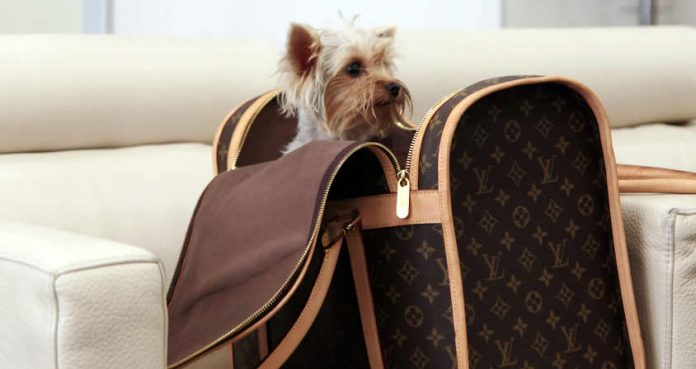 Pet dog in a bag at Ataturk Airport, Istanbul - travelling with pets