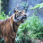 Taronga Zoo - NSW - Sydney - Australia travel