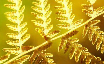 photo - macro - light - nature - yellow fern