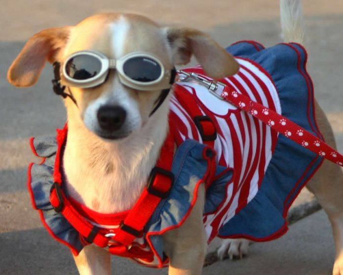 Sun protection - Australia - dog eyes protection from UV rays